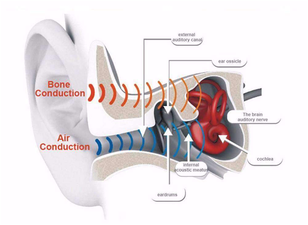 bone conduction